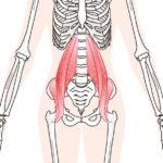 「腰が痛い、だるい」を解決してくれる腰サポータースパッツ